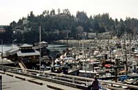 Gibsons Harbour is full of activity.